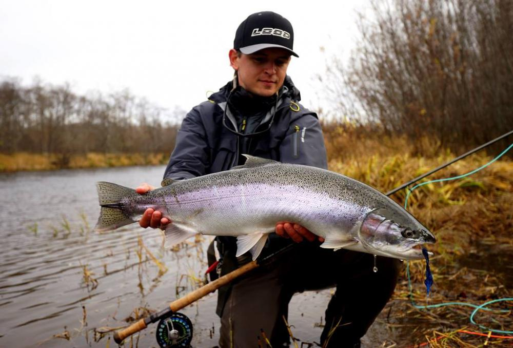 Steelhead Kamchatka